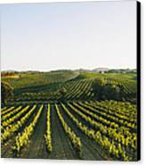 Vineyard Patchwork Canvas Print by Clint Brewer