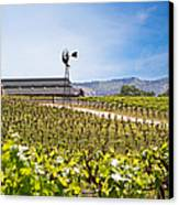 Vineyard With Young Vines Canvas Print by Susan  Schmitz