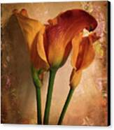Vintage Calla Lily Canvas Print by Jessica Jenney