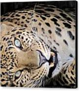 Voodoo The Leopard Canvas Print by Keith Stokes