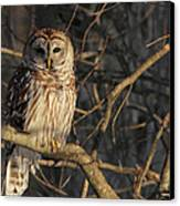 Waiting For Supper Canvas Print by Lori Deiter