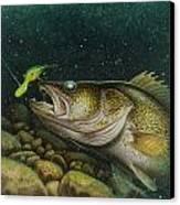 Walleye And Crank Bait Canvas Print by Jon Q Wright