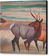 Wapiti  In Sunset Glow Canvas Print by Anastasia Savage Ealy