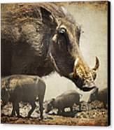 Warthog Profile Canvas Print by Ronel Broderick