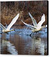 Water Dance Canvas Print by Mike  Dawson