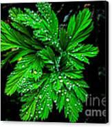 Water Drops Canvas Print by Robert Bales