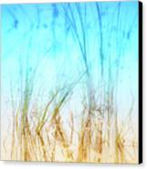 Water Grass - Outer Banks Canvas Print by Dan Carmichael