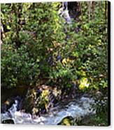 Water In The Forest Canvas Print by Susan Leggett