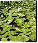 Water Lillies Canvas Print by Les Cunliffe
