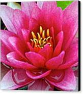Water Lilly Canvas Print by Frozen in Time Fine Art Photography