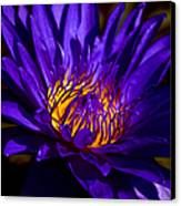 Water Lily 7 Canvas Print by Julie Palencia