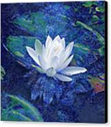 Water Lily Canvas Print by Ann Powell