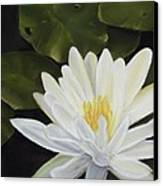 Water Lily Canvas Print by Joan Swanson