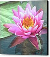 Water Lily Canvas Print by Sandi OReilly