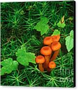Wax Cap Fungi Canvas Print by Jeff Lepore