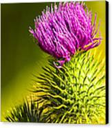 Wearing A Purple Crown - Bull Thistle Canvas Print by Mark E Tisdale