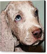 Weimaraner Dog Art - Forgive Me Canvas Print by Sharon Cummings