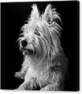 Westie Canvas Print by Catherine Reusch  Daley