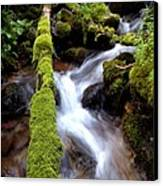 Wet And Green Canvas Print by Steven Milner