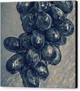 Wet Grapes Five Canvas Print by Bob Orsillo