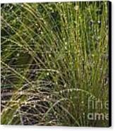 Wet Grass Canvas Print by Juan  Silva
