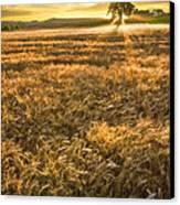 Wheat Fields Of Switzerland Canvas Print by Debra and Dave Vanderlaan