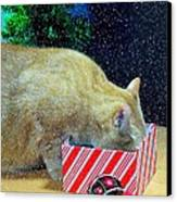 Whiskey's Present Canvas Print by Diana Angstadt