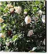 White Camellias Canvas Print by Carol Groenen