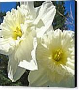 White Daffodils Flowers Art Prints Spring Canvas Print by Baslee Troutman