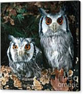 White Faced Scops Owl Canvas Print by Hans Reinhard