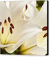 White Flowers Canvas Print by Oscar Karlsson