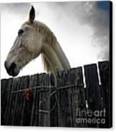 White Horse Canvas Print by Bernard Jaubert