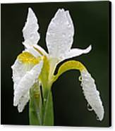 White Iris Canvas Print by Juergen Roth