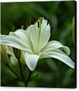 White Lily Canvas Print by Sandy Keeton