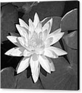 White Lotus 2 Canvas Print by Ellen Henneke