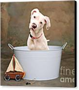 White Pitbull Puppy Portrait Canvas Print by James BO  Insogna