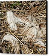 White-tailed Deer Hair Canvas Print by Linda Freshwaters Arndt