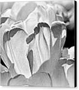 White Tulip Canvas Print by Marty Koch