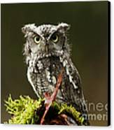 Whooo Goes There... Eastern Screech Owl  Canvas Print by Inspired Nature Photography Fine Art Photography