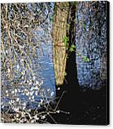 Wild Cherry Tree On The Sacramento River  Canvas Print by Pamela Patch