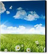 Wild Daisies In The Grass With A Blue Sky Canvas Print by Sandra Cunningham