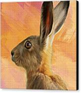 Wild Hare Canvas Print by Tanya Hall