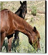 Wild Horse Mama And Her Baby Canvas Print by Sabrina L Ryan