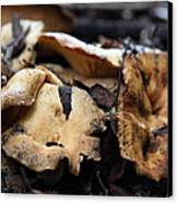 Wild Mushrooms On The Forest Floor - 5d21078 Canvas Print by Wingsdomain Art and Photography