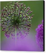 Wild Onion Canvas Print by Heiko Koehrer-Wagner