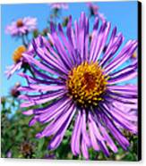 Wild Purple Aster Canvas Print by Christina Rollo