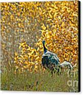 Wild Turkeys And Fall Colors Canvas Print by Robert Bales