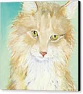 Willard Canvas Print by Pat Saunders-White