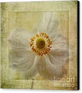 Windflower Textures Canvas Print by John Edwards