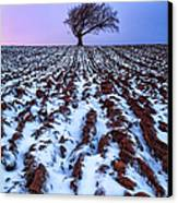 Windswept Tree Scotland Canvas Print by John Farnan